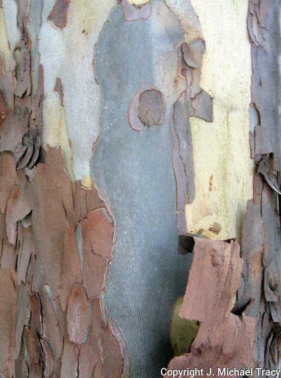 Close up tree bark photos from many different American Trees such as, Slash Pine,Pecan,Cottonwood,Birch, White Oak, Yellow Pine, Long Leaf Pine, Maple, Hickory, Gum, Cedar, Pine with trumpetvine.