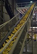 20/10/15 - SAINT MATHURIN - MAINE ET LOIRE - FRANCE - Usine de semences de mais LIMAGRAIN - Photo Jerome CHABANNE pour Limagrain
