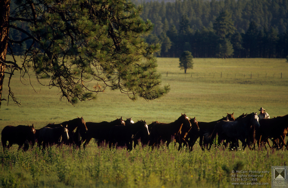 Quarter horse herd at sprucedale ranch white montains for Sprucedale ranch