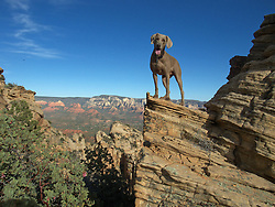 """Azul staying true to the """"Dog on the Edge""""."""