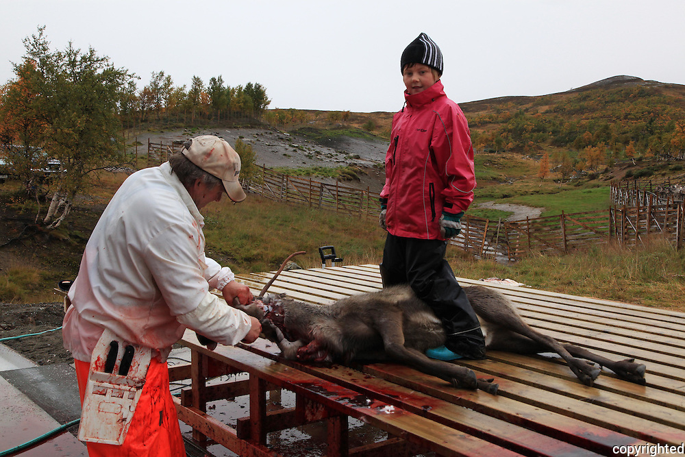 Slakter Odd Moen fra Stensaas Reinsdyrslakteri får god hjelp av Maya Stenevold Hegseth (9 år).