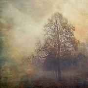 Tree shrouded in mist - painterly romantic version.<br />