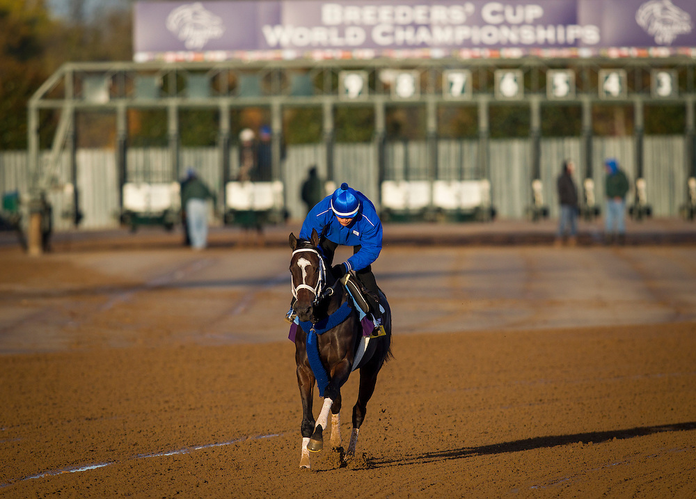 October 29, 2015:   Wedding Toast, trained by Kiaran P. McLaughlin and owned by Godolphin Racing LLC, exercises in preparation for the Longines Breeders' Cup Distaff at Keeneland Race Track in Lexington, Kentucky. Alex Evers/ESW/CSM