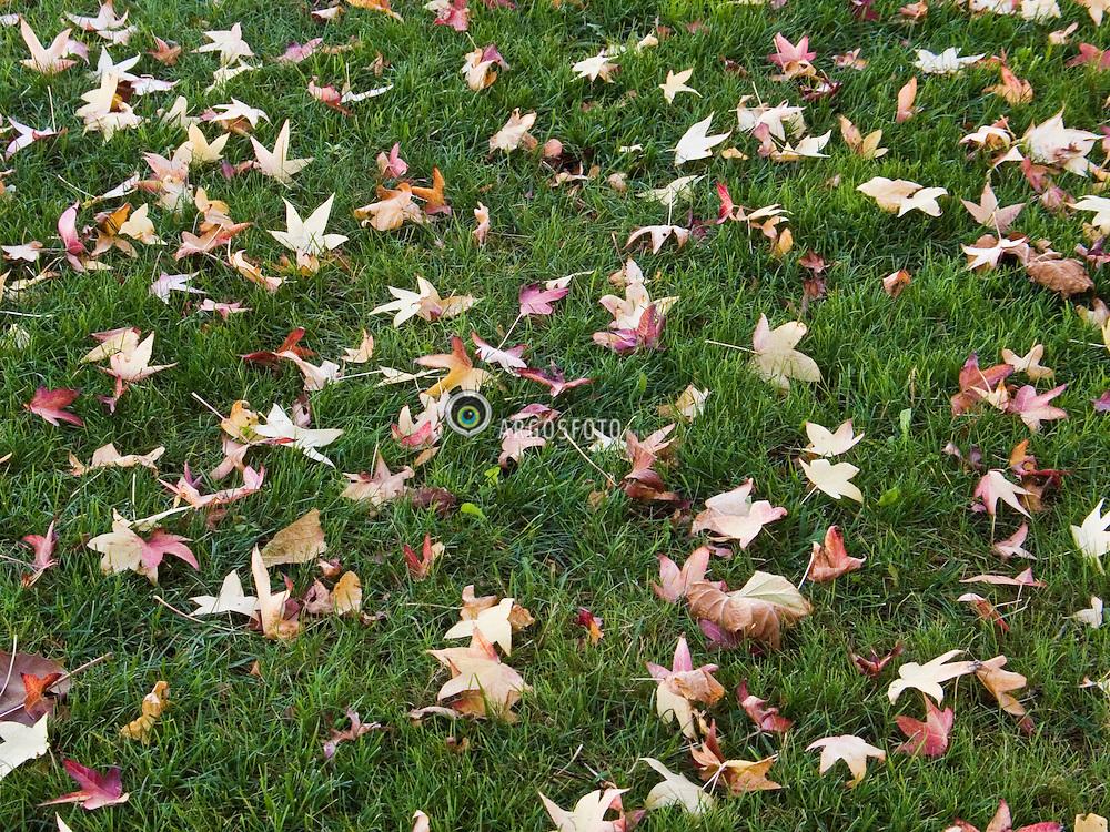 San Francisco, California, USA     Oct/2005.Outono. Folhas secas./ Autumn. Dry Leaves..Foto Marcos Issa/Argosfoto.