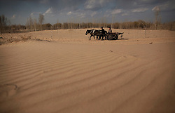 Farmers riding a horse cart through the Taminchagan desert of Kunlun Qi in the Inner Mongolia Autonomous Region of China on 23 April 2011. Inner Mongolia, China's third largest province, is fighting severe desertification, much like the provinces of Xinjiang, Gansu, Qinghai, Ningxia, Shaanxi, Heilongjiang and Hebei. Over-grazing, logging, expanding farms and population pressure, along with droughts have steadily turned once fertile grasslands into sandy plains. China has adopted measures to stop the land degradation such as reforestation, resettling nomadic Mongolians from grasslands to urban areas and restricting grazing areas. The forced removal of nomadic tribes from their traditional pastures to reduce over-grazing however remains controversial as opponents of the government's plan say herders who have grazed the grasslands for centuries are key to solving the problem while restricting them to one place would instead result in even more serious denudation of the areas they were resettled in. Tree planting has become a key government effort to combat desertification and supporting the government's reforestation endeavors are numerous non-governmental organizations (NGOs), such as Shanghai Roots & Shoots. The NGO launched the Million Tree Project in 2007 in Kulun Qi with aims to plant its first million trees by 2014 to hinder the expanding desert. To-date, they have planted more than 600,000 trees.