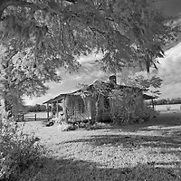 Infrared photo of cracker cabin with Spanish moss on trees