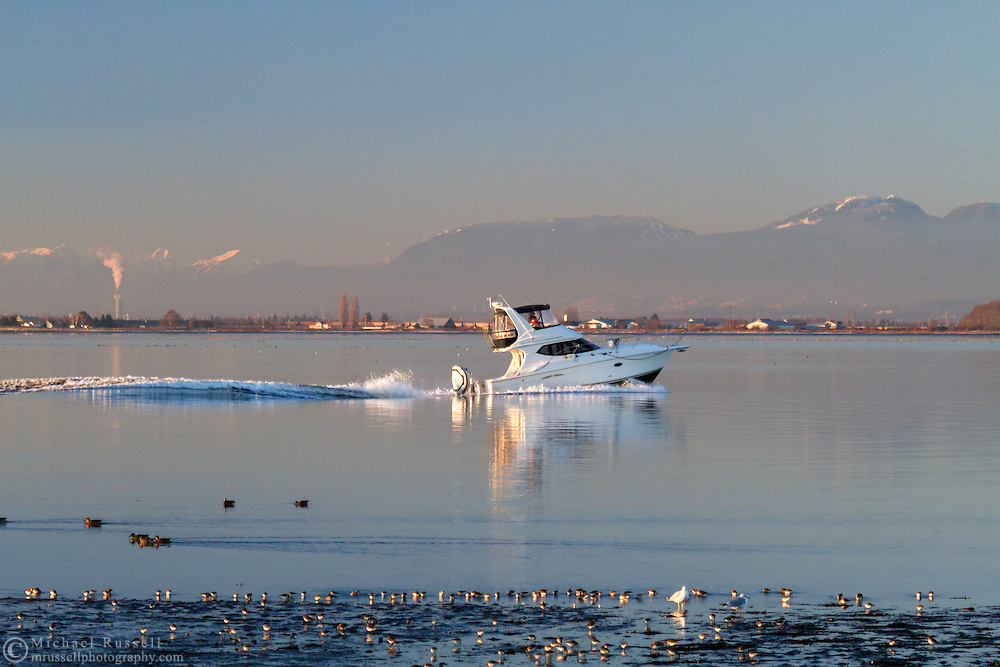 A small yacht passes Dunlin and other shore birds on the shore of Boundary Bay in Surrey, British Columbia.  Photographed from Blackie Spit at Crescent Beach.