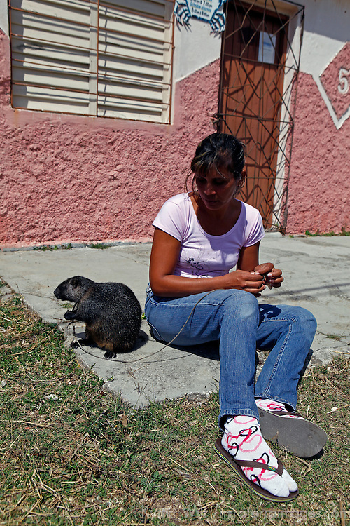 Central America, Cuba, Caibarien. Cuban girl and her pet Cuban Hutia, the largest endemic mammal on the island of Cuba.