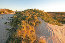 Beach spinifex lines the dunes behind Eighty Mile Beach on Mandora Station