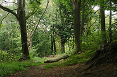 Imstenraderbos, Natuurmonumenten, Heerlen, Limburg, Netherlands,