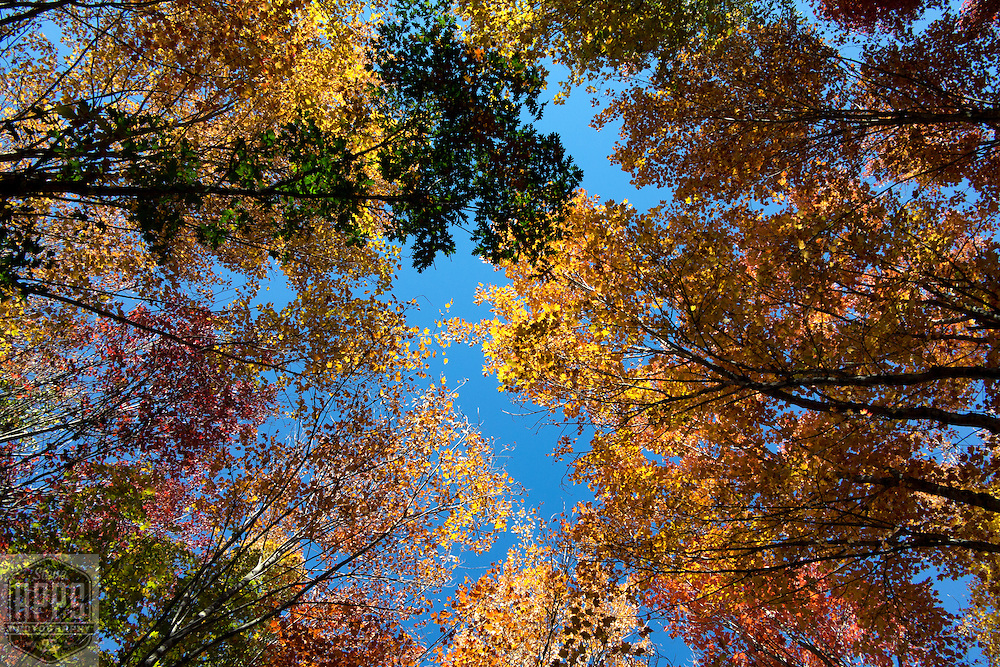 Fall colors in Waushara County, Wisconsin. A look a scenes from Waushara County, Wisconsin.
