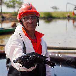 A worker holds a fish covered in oil found in the Coatzacoalcos river, in the state of Veracruz on January 7, 2012.  Greenpeace traveled in the zone affected by the oil spill in El Polvorín, in Cosoleacaque, Veracruz, that has contaminated at least 12 km of the Coatzacoalcos River. Local fishermen contracted to clean the disaster have not been paid for these activities and work under risk conditions for their health, breathing the hydrocarbon steam during more than twelve hours daily.(Photo: Greenpeace / Prometeo Lucero)