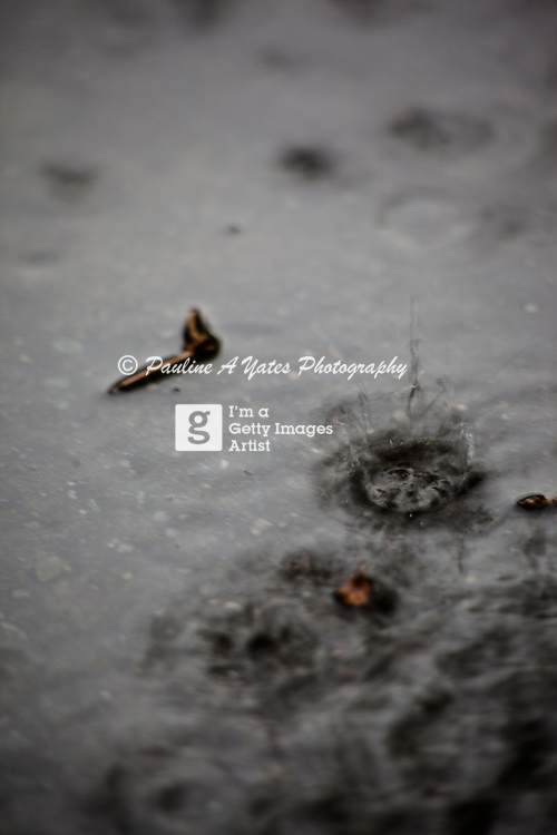 Raindrops falling heavily in a puddle. Debris and leaves floating on the surface
