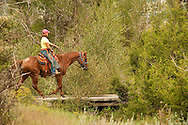 Trail Riding, teenager, girl, Quarter Horse, Montana