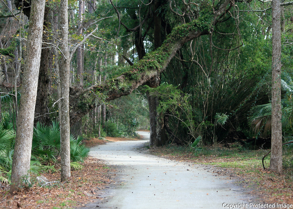 A bike path through a Jekyll Island forest lined with ancient oaks, bamboo and palmetto.