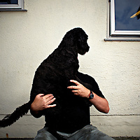 In Dog we trust by Eivind H Natvig