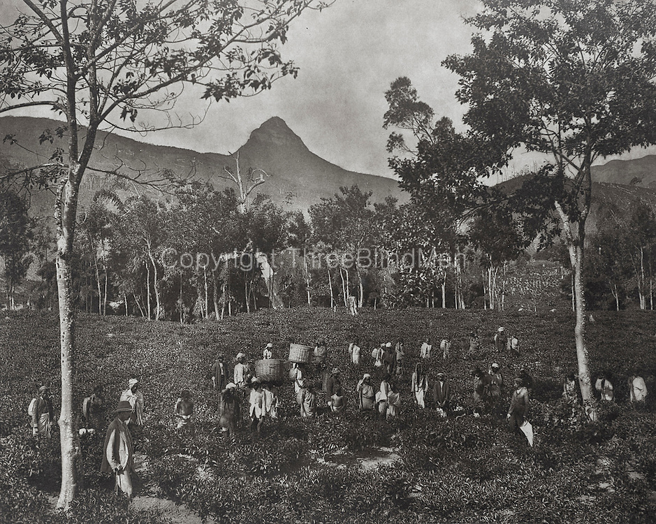 H. W. Cave. Travels in Ceylon.<br /> from Ismeth Raheem Collection