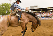 Saddle Bronc Rider makes successful ride at Miles City Bucking Horse Sale in Montana,  <br /> MODEL RELEASED