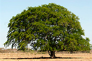 """Parque Nacional Sarigua, Panamá.El Parque Nacional creado en el año 1985 posee una extensión de 8.000 hectáreas formadas por manglares, zonas costeras y áreas completamente deforestadas en la provincia de Herrera, ocupando una franja litoral sobre el Pacífico entre las desembocaduras de los ríos santa María y Parita, en la bahía del mismo nombre.El área protegida se extiende sobre un frágil ecosistema conocido como """"albina"""".Se trata de una zona completamente deforestada y devastada por la acción colonizadora de los pobladores del área en la segunda mitad del siglo xx.Los frágiles bosques costeros del parque, que originalmente llegaban hasta los manglares, fueron destruidos en su totalidad para transformarlos en potreros y zonas de pastoreo, dejando los suelos ácidos y pobres expuestos a la erosión causada por los fuertes vientos, las lluvias del invierno y el flujo de las mareas.El parque se encuentra en la región más árida del país, con una precipitación media anual de 1.100 mm y unas temperaturas medias anuales que superan los 27ºC, formando un paisaje desértico que no se conoce en ningún otro lugar de Panamá.La belleza de estos paisajes desprovistos de todo tipo de vegetación y atravesados por profundas grietas y cárcavas producidas por la erosión es uno de los atractivos de este parque nacional.©Daniel Ho/ Istmophoto"""