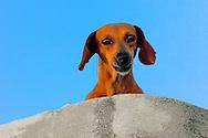 Dog in Campechuela, Granma, Cuba.