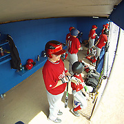 04/14/12 Newark Del. Phillies players standing in the dug out in the second inning of a Canal L.L. League game against the A's Saturday, April. 14, 2012 at Canal L.L. Complex in Bear Delaware...Special to The News Journal/SAQUAN STIMPSON