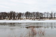 March 24, 2017 – Emerson, Manitoba : A row of trees line the Canada-US border on the southern bank of the Red River in the town of Emerson.