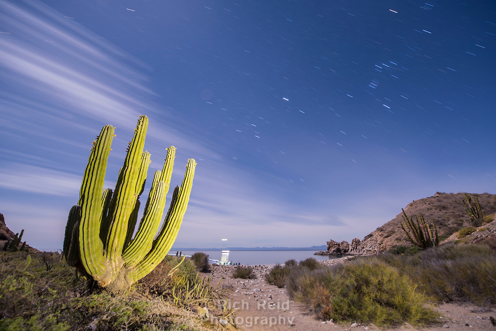 Time exposure and light painting a Giant Cardon on Isla Santa Catalina in Bahia de la Loreto National Park in the the Gulf of California, Mexico.