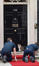 JUNE 16 2013 Downing Street Cat  - Larry