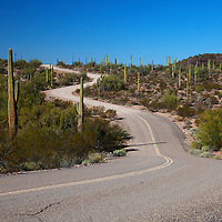 North America, USA, Arizona, Organ Pipe Cactus National Monument. Highway 85.