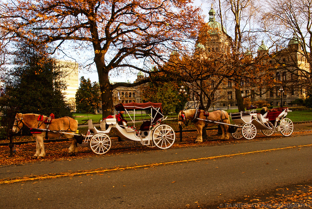 Horse Carriages & British Columbia Parliament Building, Victoria, Canada