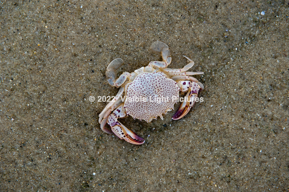 Crab on beach, Cape Cod, MA