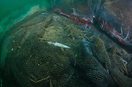 Abandoned ghost net continues to fish and causing indiscriminate destruction to the marine habitat.