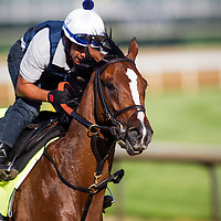 Normandy Invasion in preparation for the Kentucky Oaks at Churchill Downs in Louisville, KY on May 01, 2013. (Alex Evers/ Eclipse Sportswire)