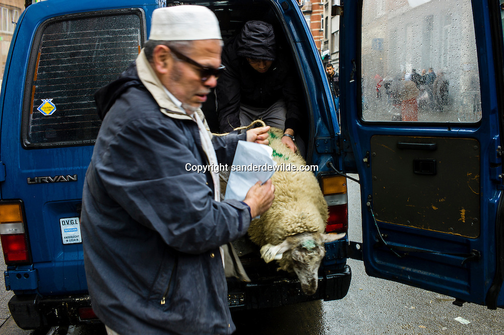 2012 26 October Brussels, Belgium. During Eid al-Adha, many Muslim families sacrifice a sheep and share the meat with the poor. Two men make a sheep get of of a van. The government of Belgium forbids slaughtering at home, and put up temporary slaughterhauses, like here in Brussels.