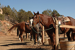 Horses tied up at the hitching post