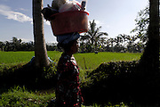 Woman carrying basket on head beside rice field on the outskirts of Ubud. Bali revisited January 2012.