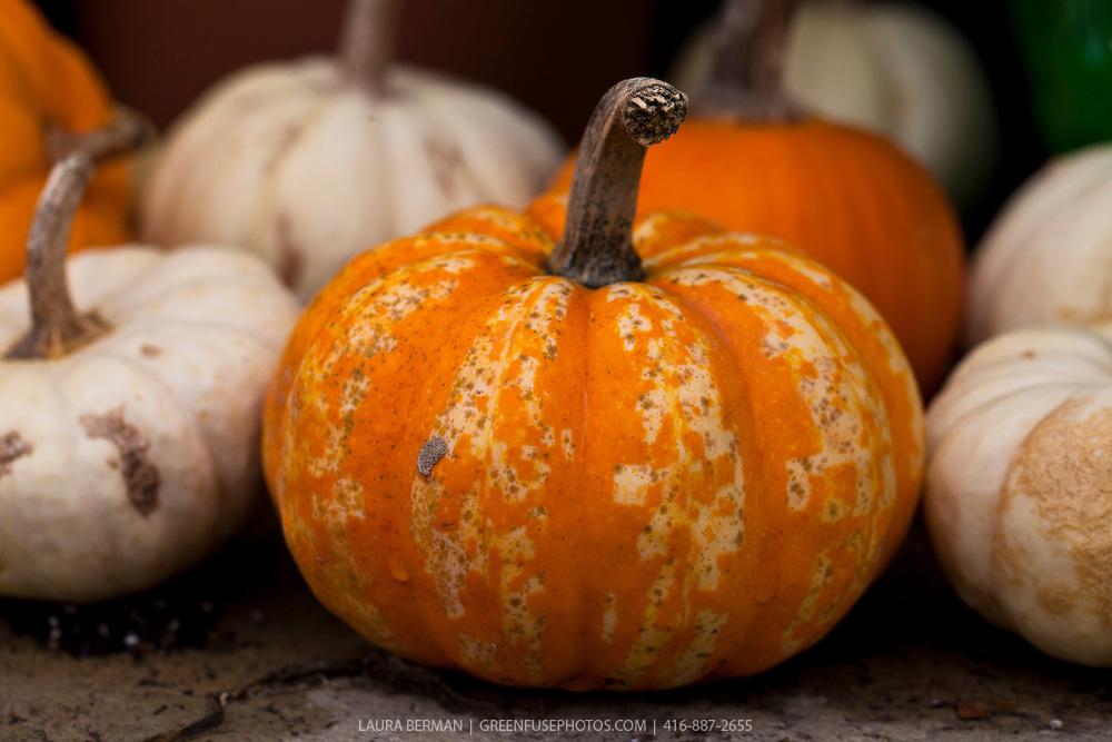 Mini pumpkin.