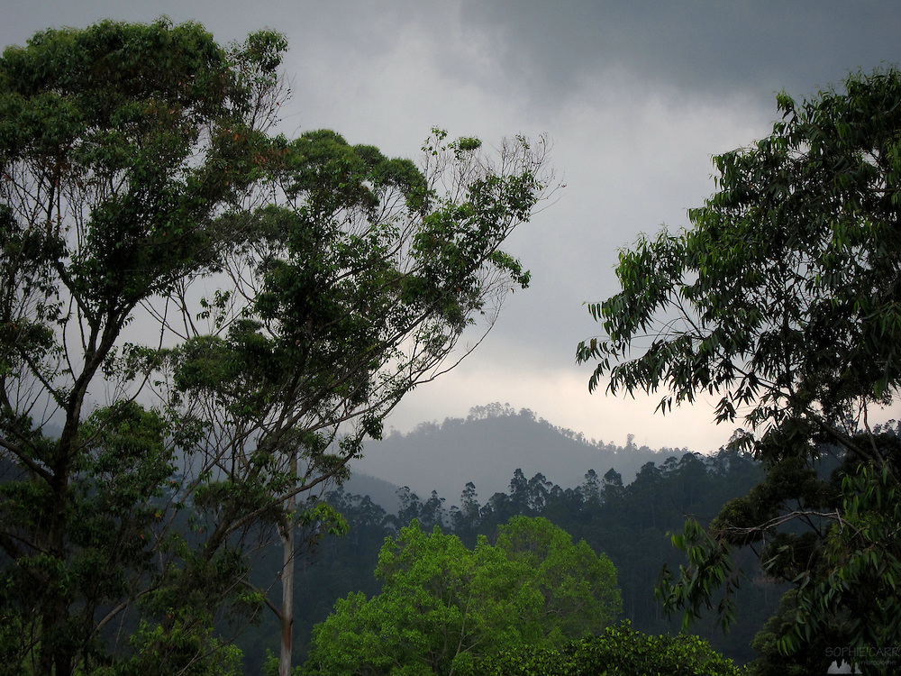 Just before the rains came, near Ella, in Sri Lanka's hill country