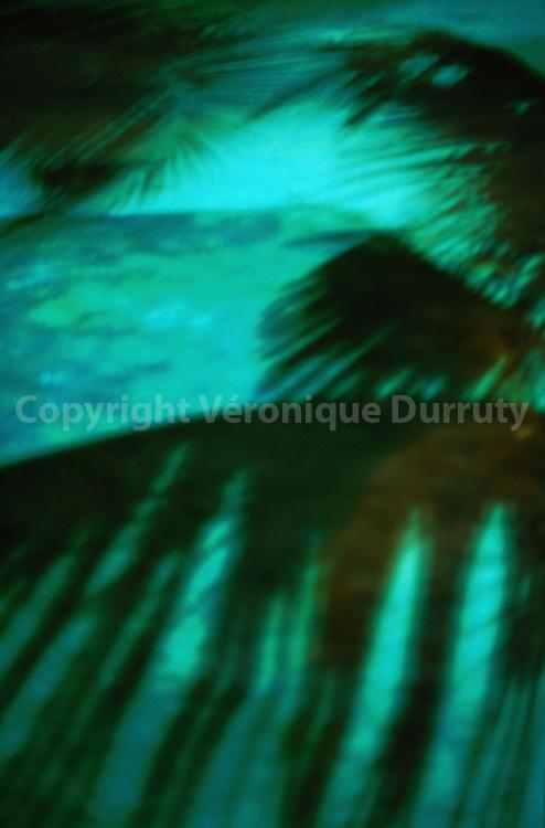 Ombre de palmier sur le sable / Shadow Of a Palmtree on the sand