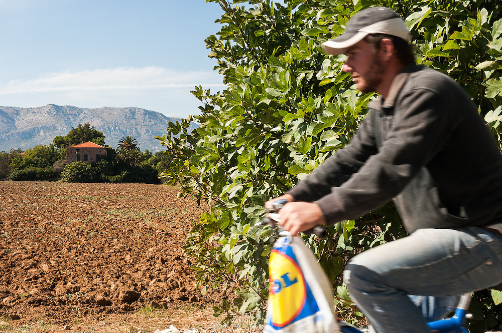 A farmer cycles by a field in Kampos, Chios. <br /> Kampos of Chios  is one of the most distinctive areas of the island. It is 6 Km south of Chios Town and is widely known for the impressive mansions with their citrus fruits gardens. The area is protected by the Greek Ministry for Culture, as a historic site and traditional settlement. The high walls made of the local reddish stone protect the gardens of citrus fruits from extreme weather conditions.  The Genoese and local aristocracy of Chios started building their mansions in the area in the 14th century. The name &ldquo;Kampos&rdquo; (&ldquo;Campus&rdquo; in Latin) is found in travellers&rsquo; accounts since 1673.  The Genoese created the extensive citrus gardens in Kampos in the 13th century.