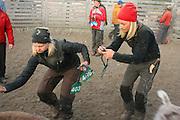 Marking the reindeer calves. Reindeer herders at Saanti Sijte, Mid-Norway..