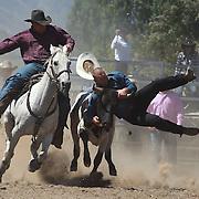 Wanaka Rodeo