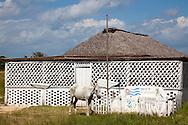 Horse and palenque in Las Martinas, Pinar del Rio, Cuba.