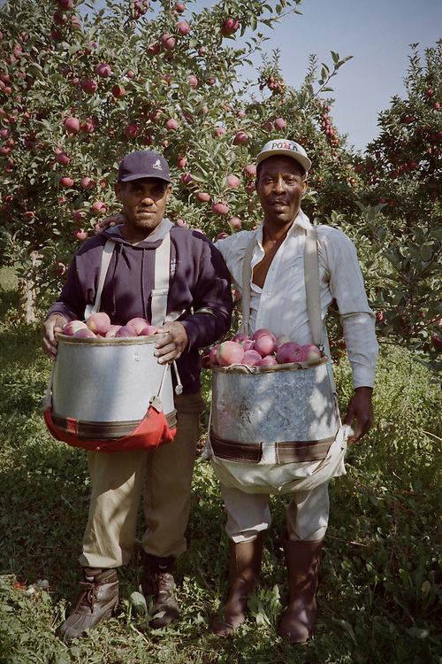 These two men have filled their bins of apples and are ready to empty and continue picking.