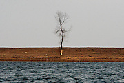 A tree stands alone in the bank of the Yalu river in Sinuiju, North Korea, on Thursday, Feb. 8, 2007. The Six Party talks have started on the 8th of February in Beijing with the hope of terminating the nuclear program of North Korea