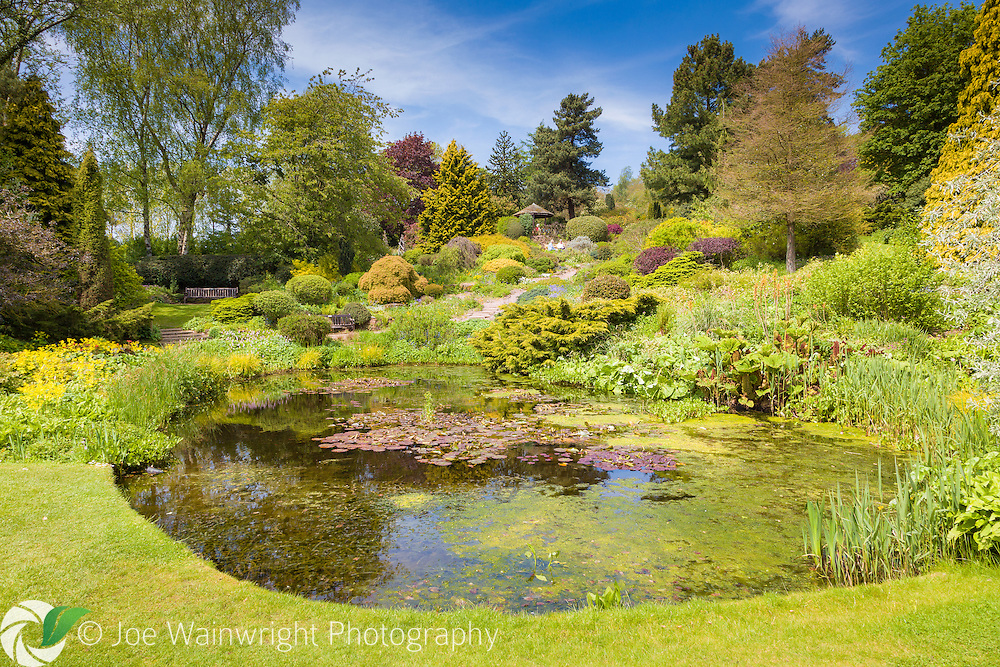 A gravel path winds up from The Pool, in Dorothy Clive Garden, Staffordshire - photographed in May