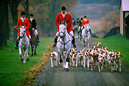Fox hunting, Old Chatham, NY