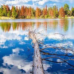 Fallen tree, Sprague Lake, Rocky Mountain National Park, Colorado