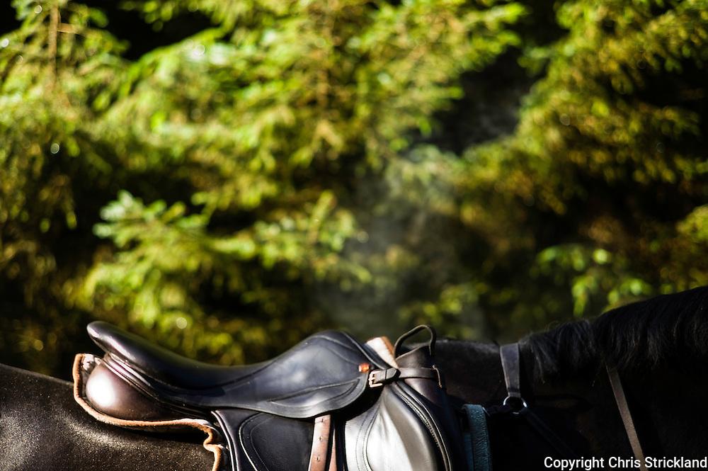 Edgesrton , Jedburgh, Scottish Borders, UK. 24th September 2015. A huntsman horse in the sunlight during Autumn hunting.