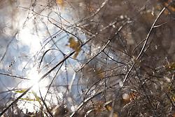 A tangle of brush near the Lake Nokomis Shorline